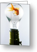 Carp Greeting Cards - Goldfish in light bulb  Greeting Card by Garry Gay