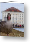 Nymphenburg Greeting Cards - Goose Greeting Card by Andrew  Michael