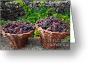 Wicker Baskets Greeting Cards - Grape harvest Greeting Card by Gaspar Avila
