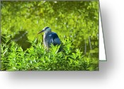 Great Blue Heron Digital Art Greeting Cards - Great Blue Heron Hiding Greeting Card by J Larry Walker