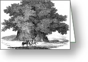 1833 Greeting Cards - Great Chestnut Tree Greeting Card by Granger