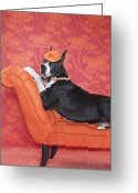 Laziness Greeting Cards - Great Dane (canis Lupus Familiaris) On Couch Greeting Card by Catherine Ledner