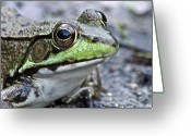 Amphibian Greeting Cards - Green Frog Greeting Card by Michael Peychich