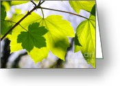 Sunlight Greeting Cards - Green Leaves Greeting Card by Carlos Caetano