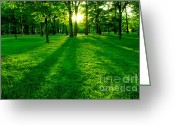 Shine Greeting Cards - Green park Greeting Card by Elena Elisseeva