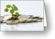 Grow On Trees Greeting Cards - Green shoot growing on euros coins Greeting Card by Sami Sarkis