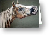 Melita Safran Greeting Cards - Haflinger Greeting Card by Melita Safran