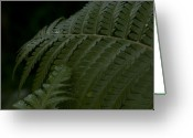 Photographs Digital Art Greeting Cards - Hapuu Pulu Hawaiian Tree Fern  Greeting Card by Sharon Mau