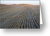 Open Range Greeting Cards - Harvested Farmland, Palouse, Washington Greeting Card by Paul Edmondson