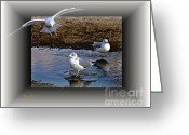 Seabirds Digital Art Greeting Cards - Heads Up Greeting Card by Dale   Ford