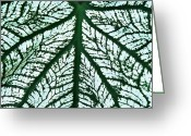 Green And White Greeting Cards - Heart Shaped Leaf 2   Greeting Card by Sarah Loft