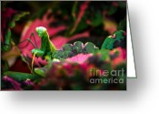 Compound Greeting Cards - Here I Am Greeting Card by Robert Bales