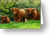 Horns Greeting Cards - Highland Cattle Greeting Card by Angel  Tarantella
