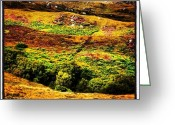 Picoftheday Greeting Cards - Highlands Colors Greeting Card by Luisa Azzolini