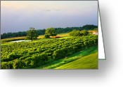 Misty Prints Prints Greeting Cards - Hillside Vineyard Greeting Card by Steven Ainsworth