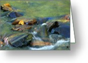 Cascades Greeting Cards - Hitching A Ride Greeting Card by Sandra Bronstein