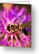 Flying Greeting Cards - Honey bee  Greeting Card by Elena Elisseeva