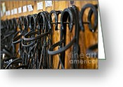 Rustic Greeting Cards - Horse bridles hanging in stable Greeting Card by Elena Elisseeva