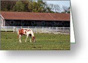 Barn Images Greeting Cards - Horse Greeting Card by John Rizzuto
