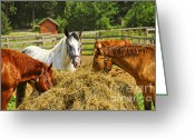 Feed Greeting Cards - Horses at the ranch Greeting Card by Elena Elisseeva