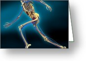 Sprinting Greeting Cards - Human Anatomy, Artwork Greeting Card by Carl Goodman