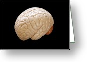 Nervous Greeting Cards - Human Brain Greeting Card by Richard Newstead
