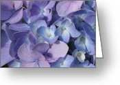 Purple Garden Greeting Cards - Hydrangea Greeting Card by Cindi Ressler