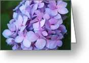 Purple Flowers Greeting Cards - Hydrangea Greeting Card by Rona Black