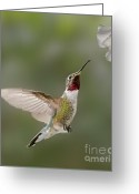 Pollinate Greeting Cards - I Can Taste You Greeting Card by Susan Candelario
