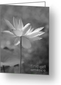 Florida Flowers Greeting Cards - I Love Lotus Greeting Card by Sabrina L Ryan