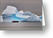 Austral Greeting Cards - Ice Ice Baby Greeting Card by Tony Beck