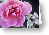 Frost Greeting Cards - Icy rose Greeting Card by Elena Elisseeva