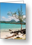 Azure Blue Greeting Cards - Ile aux Cerfs Mauritius Greeting Card by David Gardener
