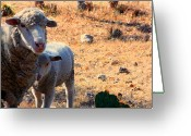 Protective Mother Greeting Cards - Impoverished Sheep Greeting Card by Josh  Montgomery