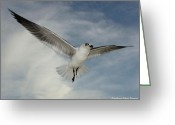 Panama City Beach Greeting Cards - In flight 2 Greeting Card by Sharon Ventimiglia