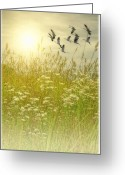 Bird Framed Prints Greeting Cards - In Gods Country Greeting Card by Thomas York