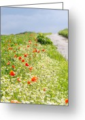 Gray Sky Greeting Cards - In Summertime Greeting Card by Angela Doelling AD DESIGN Photo and PhotoArt