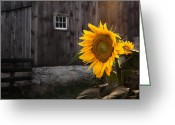 Old Barn Greeting Cards - In the Light Greeting Card by Bill  Wakeley
