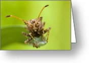 Antenna Greeting Cards - Insect Greeting Card by Andre Goncalves