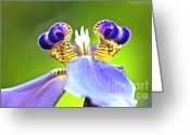 Blue Petals Greeting Cards - Iris Flower Greeting Card by Heiko Koehrer-Wagner