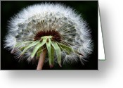 Outdoor Still Life Greeting Cards - Its a Dandy Greeting Card by Karen M Scovill