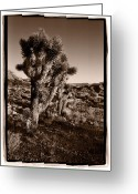 Scrub Greeting Cards - Joshua Tree Forest Utah Greeting Card by Steve Gadomski
