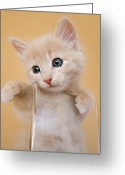 Blue Eyes Greeting Cards - Kitten In Glass Vase Greeting Card by Sanna Pudas