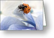 Featured Greeting Cards - Ladybug Greeting Card by Nailia Schwarz