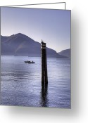 Seagull Photo Greeting Cards - Lake Maggiore Greeting Card by Joana Kruse