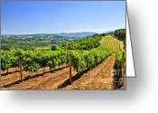 Green Vines Greeting Cards - Landscape with vineyard Greeting Card by Elena Elisseeva