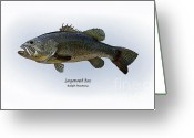 Game Drawings Greeting Cards - Largemouth Bass Greeting Card by Ralph Martens