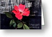 Pinkish Greeting Cards - Last Rose of the Summer Greeting Card by Marsha Heiken