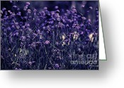 Artography Greeting Cards - Lavender Garden II Greeting Card by Jayne Logan