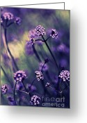 Violet Prints Greeting Cards - Lavender Garden III Greeting Card by Jayne Logan